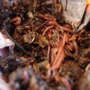 Organic farming with worms – book review