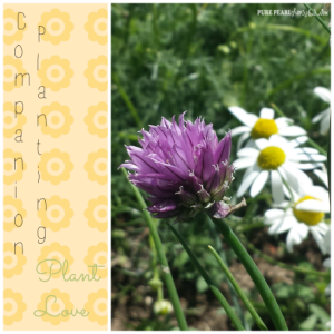 Companion Planting-Part II Plant Love