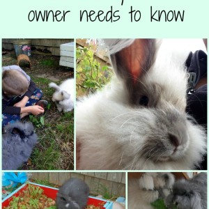 GI Stasis – What every rabbit owner needs to know