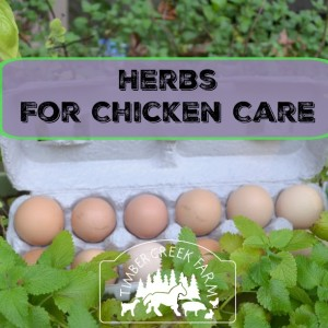 Favorite Herbs for Chicken Care