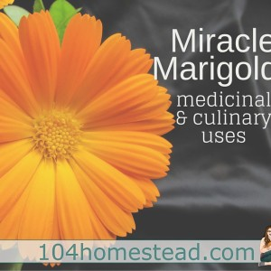 Miracle Marigolds