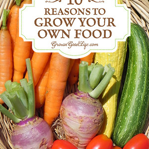 10 Reasons Why You Should Grow Your Own Food