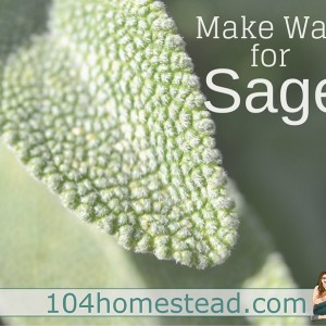 Make Way for Sage {The Culinary & Medicinal Herb}