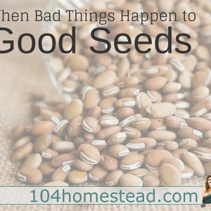 When Bad Things Happen to Good Seeds