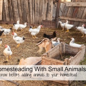 Urban Homesteading With Small Animals