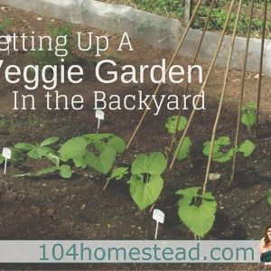 Setting Up a Veggie Garden in the Backyard