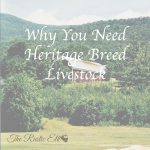 Why You Need Heritage Breed Livestock