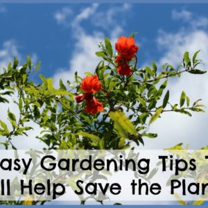 10 Easy Gardening Tips That Will Help Save the Planet