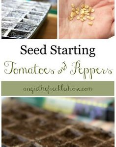 Seed Starting: Tomatoes and Peppers