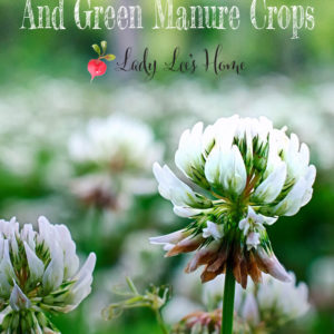Understanding Cover Crops and Green Manure Crops