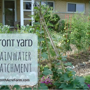 Front Yard Rainwater Catchment