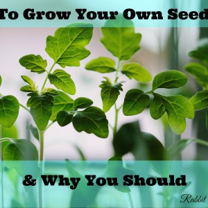 The Complete Guide to Growing Seedlings & Why You Should