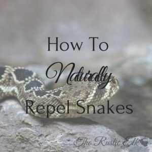 How to Naturally Repel Snakes
