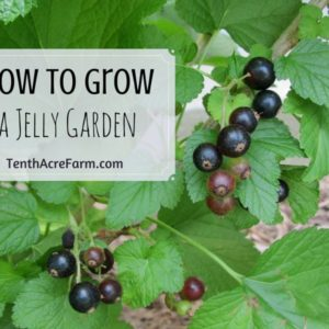 How to Grow a Jelly Garden