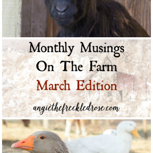 Monthly Musings On The Farm