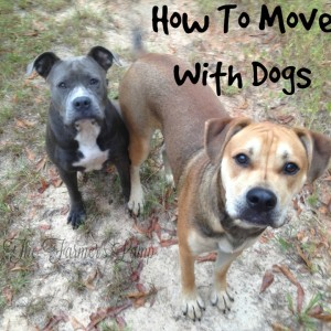 How to Move With Dogs