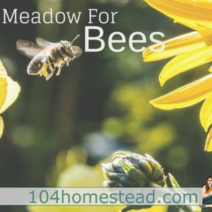 Plant a Meadow for Bees (even in the 'burbs)