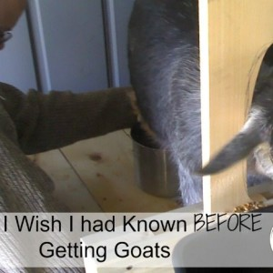 What I Wish I Had Known Before Getting Goats