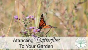 How To Attract Butterflies to your Garden - Homestead ...