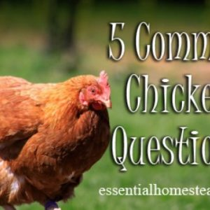 5 Common Chicken Questions
