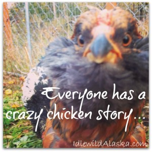 Everyone Has a Crazy Chicken Story