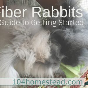 Getting Started with Fiber Rabbits