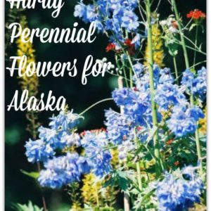 Hardy Perennial Flowers for Alaska