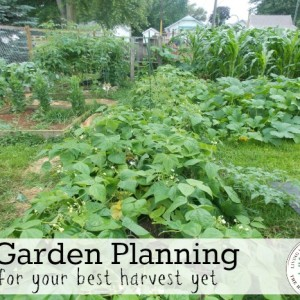How to Plan Your Garden with The Garden Planner