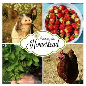 The Best Way to Learn is to Teach: Why It's Important to Teach Homesteading Skills