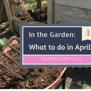 In the Garden: What to do in April