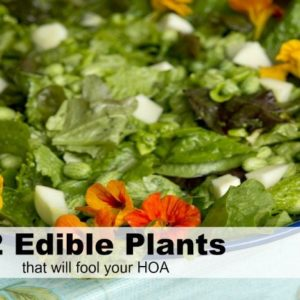 42+ Garden Plants that Will Fool Your HOA