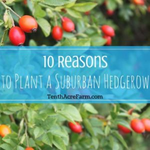 10 Reasons to Plant a Suburban Hedgerow