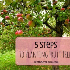 5 Steps to Planting Fruit Trees