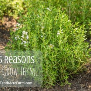6 Reasons to Grow Thyme