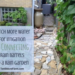 Connecting Rain Barrels to a Rain Garden