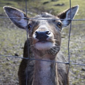 The Perfect (And Worst) Deer Fences To Have