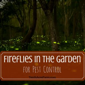 Fireflies in the Garden for Pest Control