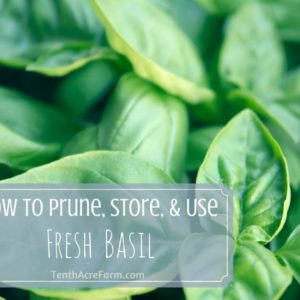 How to Prune, Store, and Use Fresh Basil