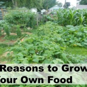 Top Reasons to Grow Your Own Food
