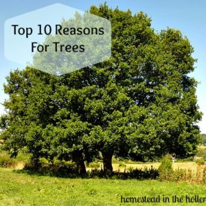10 Reasons for Trees