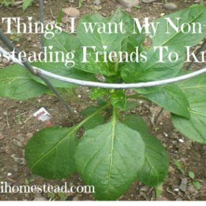 10 Things I Want My Non-Homesteading Friends To Know