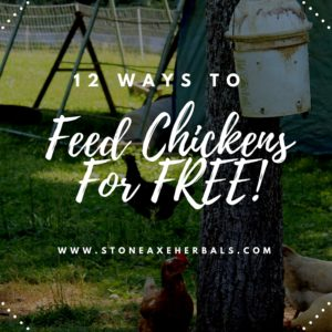 12 Creative Ways to Feed Your Flock for FREE!