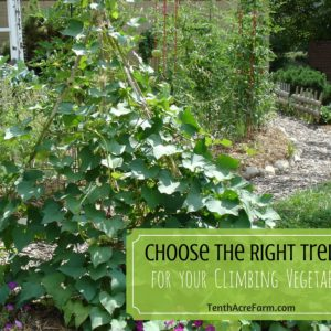 Choose the Right Trellis for your Climbing Vegetables