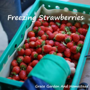 How To Freeze Strawberries So They Don't Stick Together