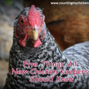 Five Things All New Chicken Keepers Should Know