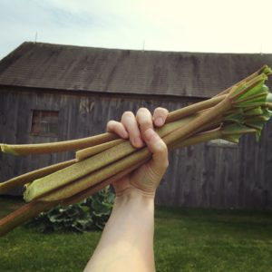 Helpful Herbs: Rhubarb