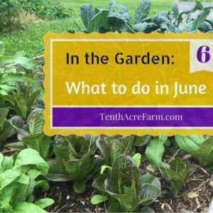 In the Garden: What to do in June