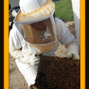 Apiary for Beginners: Part IV