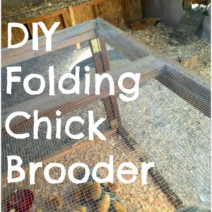 DIY Folding Chick Brooder