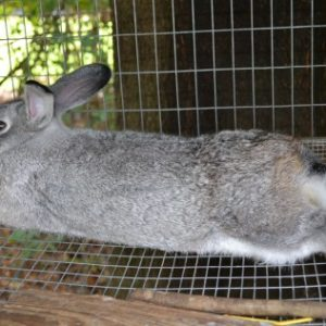 keeping rabbits cool in a hot climate